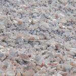 لاشه سنگ معدن عباس آباد